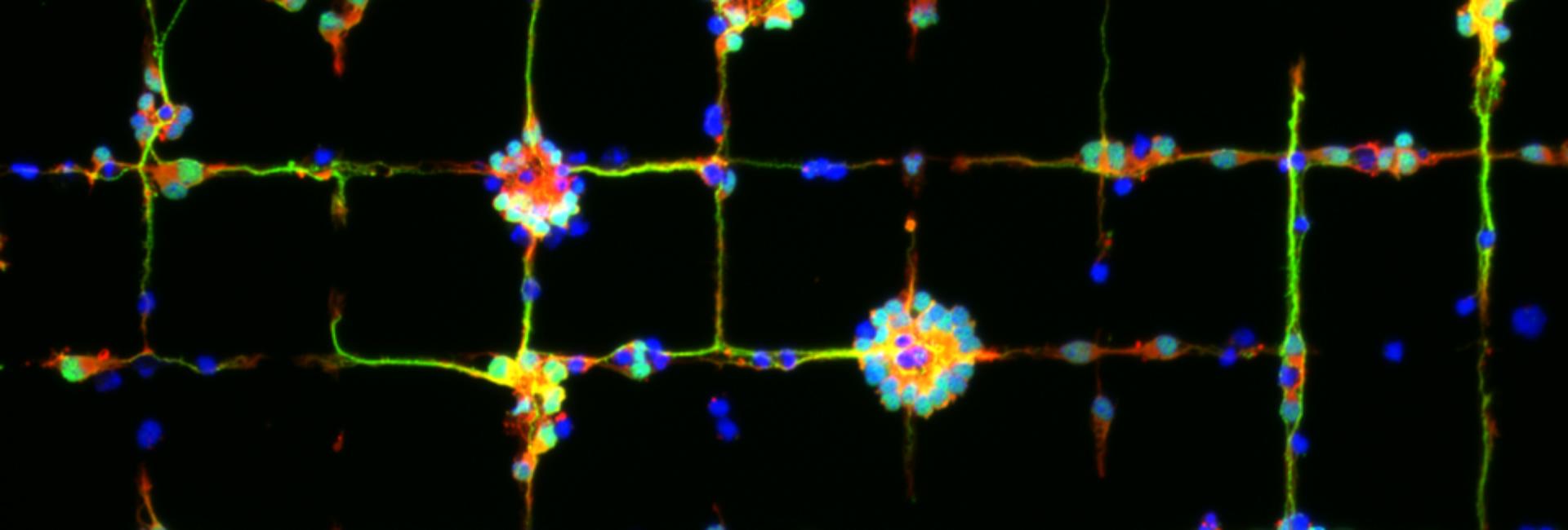 Wir bringen  Zellen das Wandern bei.