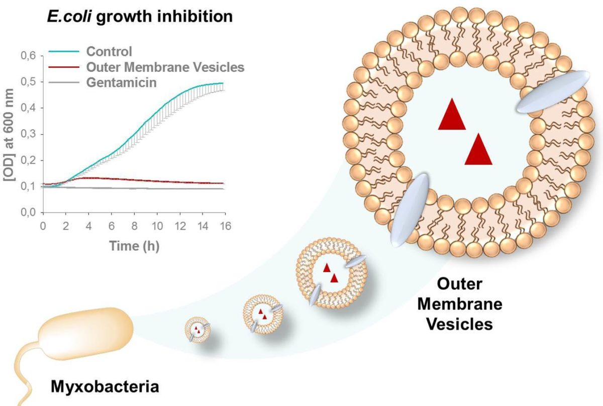 Bakterien-Vesikel als neuartige Therapieform gegen Infektionskrankheiten?