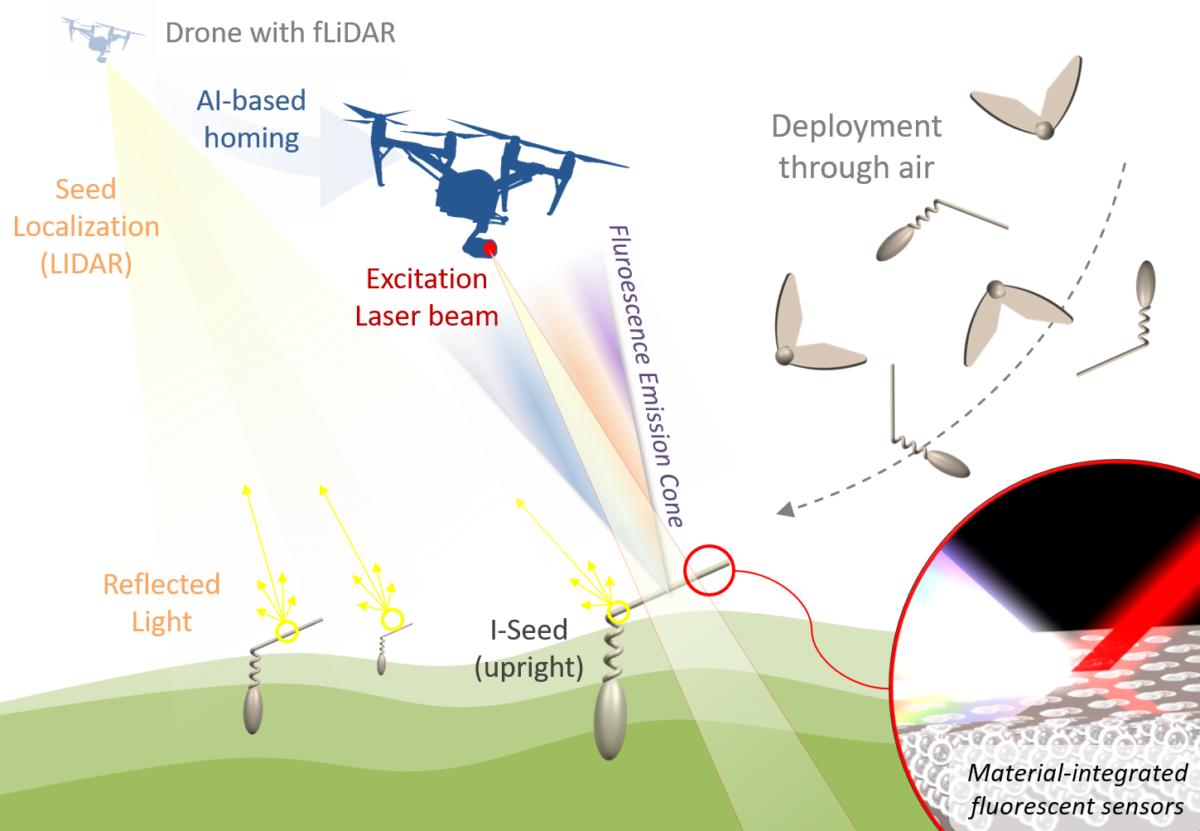 Biologisch abbaubare weiche Roboter imitieren Pflanzensamen zur Überwachung von Boden- und Luftqualität