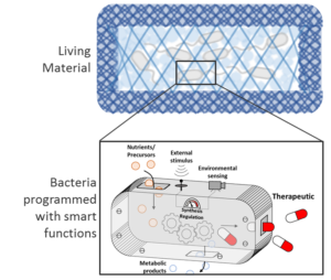 Bioprogrammierbare Materialien
