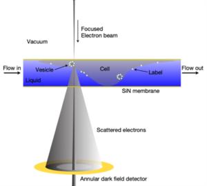 Innovative Electron Microscopy 16